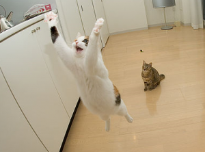 Airborne-Cats-300x222.PNG